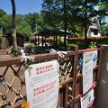 Photos: 桜橋から (46)