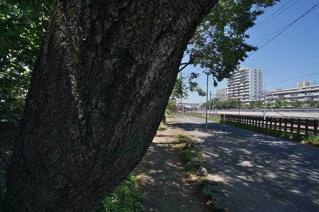 桜橋から (50)
