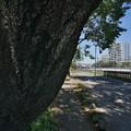Photos: 桜橋から (50)