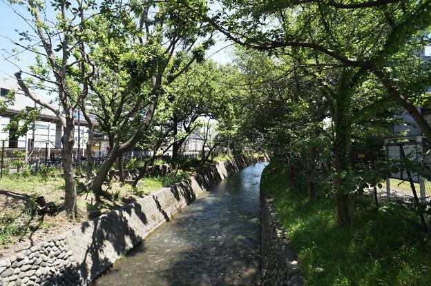 桜橋から (51)
