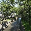 Photos: 桜橋から (51)