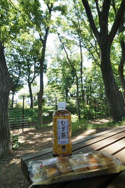桜橋から (53)