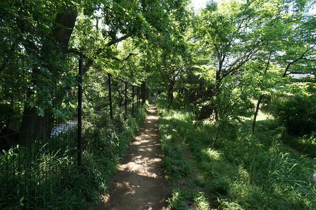 桜橋から (57)