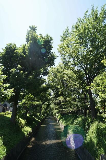 桜橋から (60)