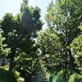 Photos: 桜橋から (60)