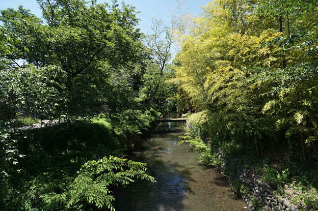 Photos: 桜橋から (62)