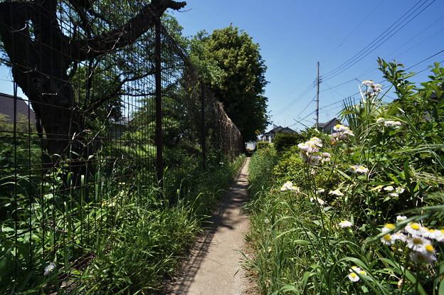 桜橋から (63)