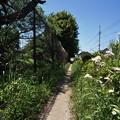Photos: 桜橋から (63)
