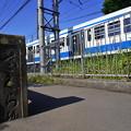 Photos: 桜橋から2 (2)