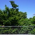 Photos: 桜橋から2 (19)