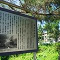 Photos: 桜橋から2 (21)