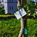 Photos: 桜橋から2 (23)