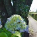Photos: 桜橋から2 (24)