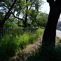 Photos: 桜橋から2 (30)