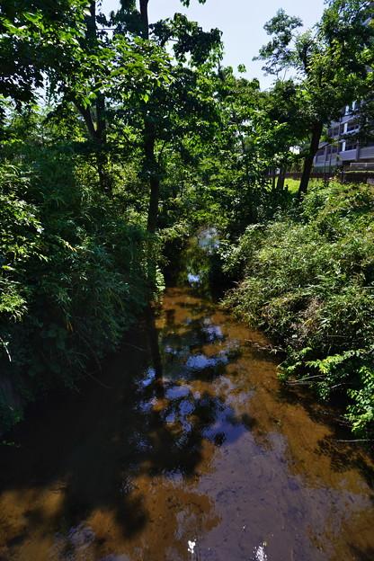 桜橋から2 (34)