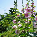 Photos: 桜橋から2 (35)