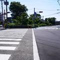 Photos: 桜橋から2 (36)