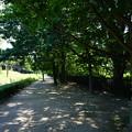 Photos: 桜橋から2 (41)