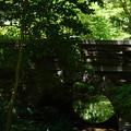 Photos: 桜橋から2 (53)