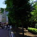 Photos: 桜橋から2 (54)