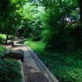 Photos: 桜橋から2 (59)