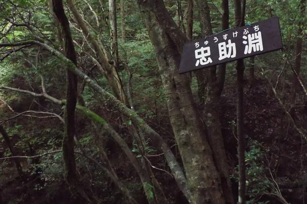 Photos: 秋川 (22)