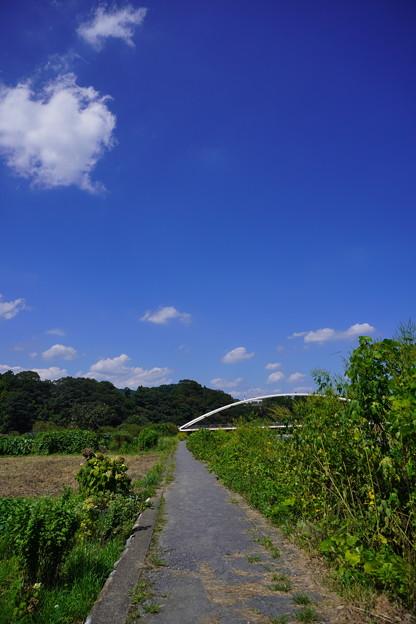 秋川 (101)