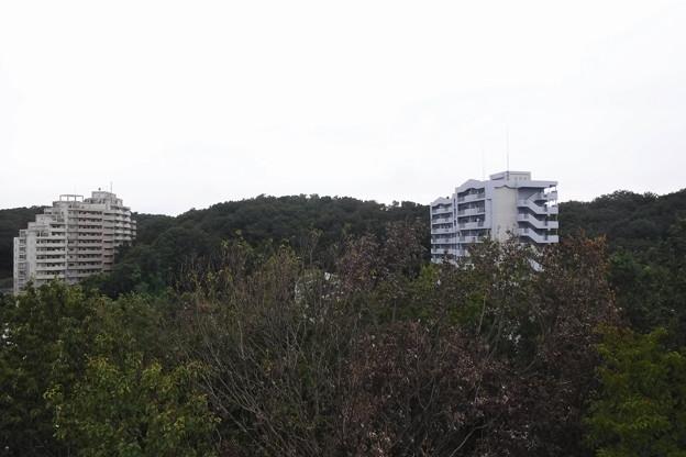 城山 (25)