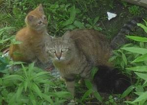 07_06親子のら猫