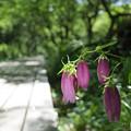 写真: 高原の夏