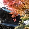 写真: 染まる円覚寺
