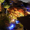 Photos: 長谷寺ライトアップ
