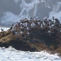 Photos: 北海の岩