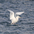 Photos: White gull wing