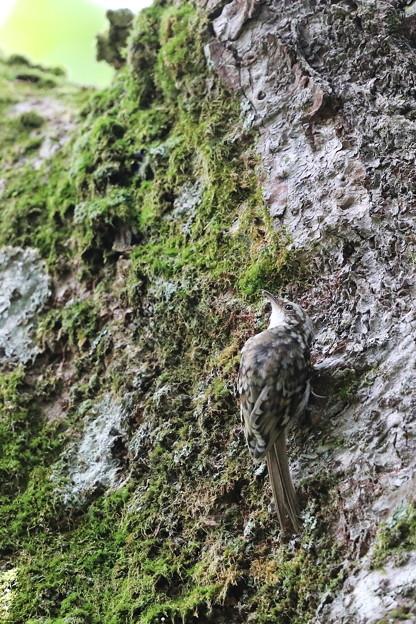 Photos: climber