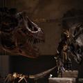 Photos: T.REX vs Triceratops