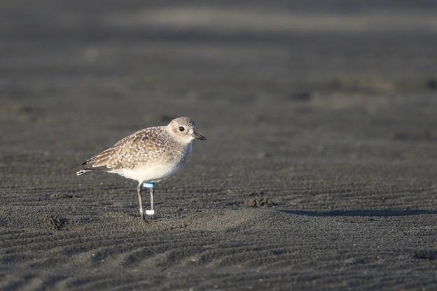 Photos: 砂紋に佇む