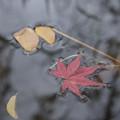 Photos: 秋の跡