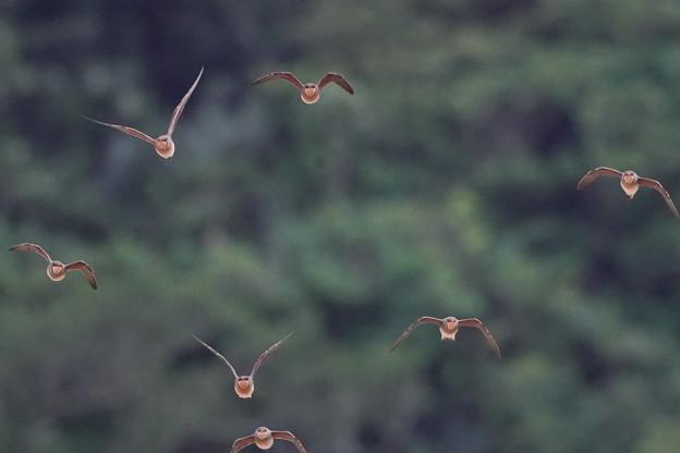 モコモコさん飛ぶ