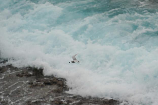 波頭を翔ぶ