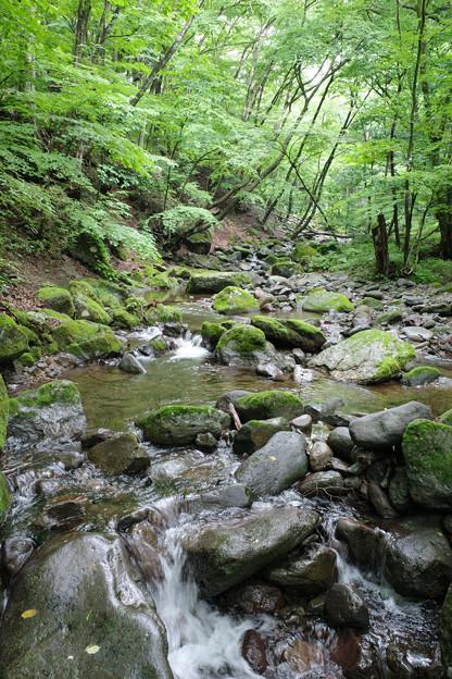 緑に染まる渓谷