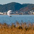 Photos: 帆曳船