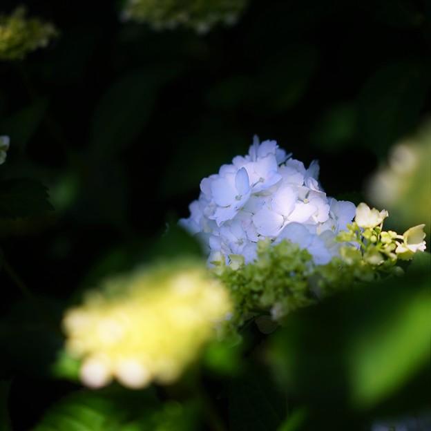 Photos: r_'18_06_21 7M2_deshio-103 (2)