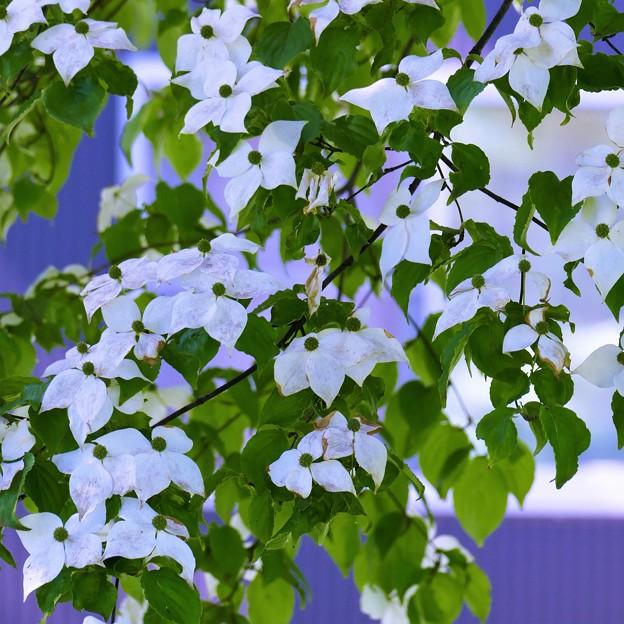 '18_07_01-FZ1000_shinjo-126 (3)