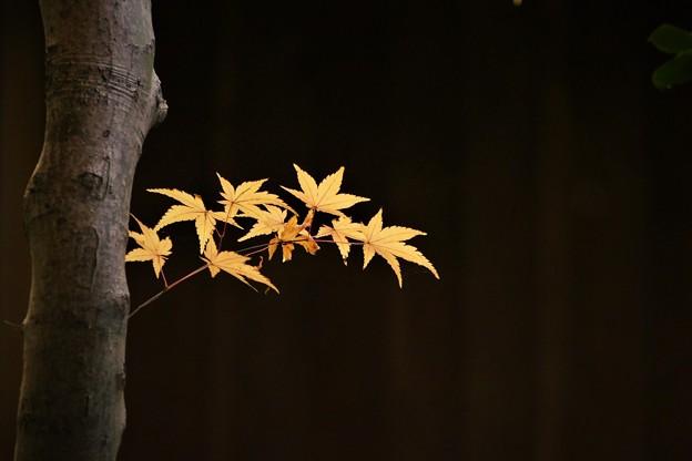 '18_11_16-FZ1000_momiji--203 (2)