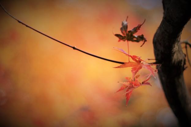 '18_12_03 M3_houraiji-033 (2)