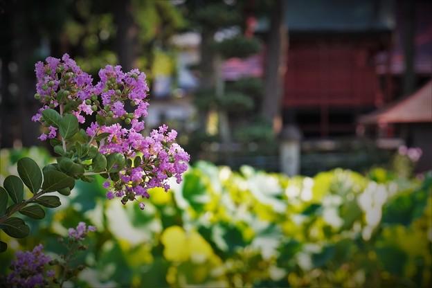r_'19_09_12 7m3_yagashiwa-0124 (2)