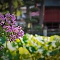 Photos: r_'19_09_12 7m3_yagashiwa-0124 (2)