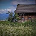 Photos: r_'19_09_12 7m3_yagashiwa-0161 (2)