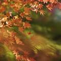 Photos: r_'19_10_31 7m2_shakugyouji-0073 (2)